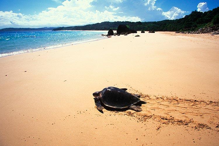 NIHI Sumba Resort - Turtles by Jason Childs